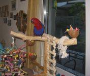 Farbenfrohe Zufriedenheit in der Vogelstation.de