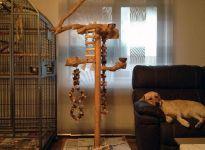 Leni ... keine schlafenden Hunde wecken I